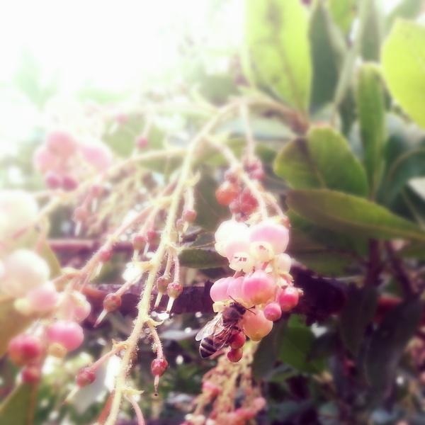 fragrant morning
