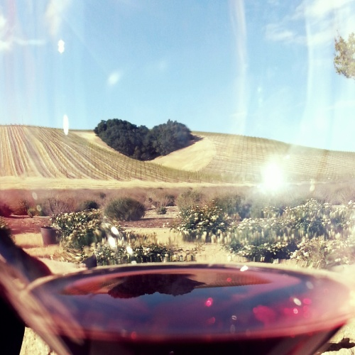 heart hill and wine and sunshine