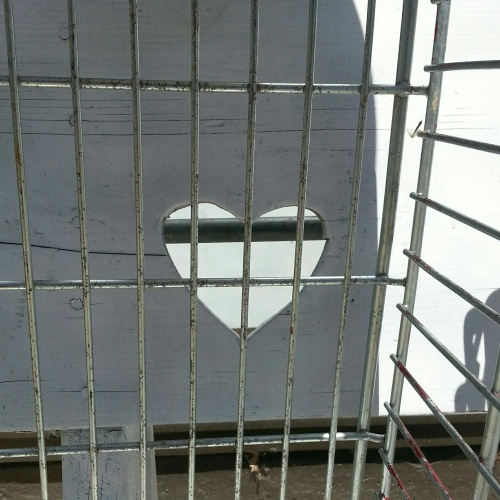 heart wired caged