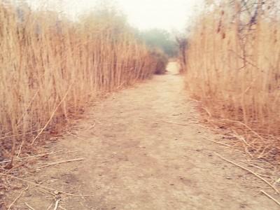 dry paths...conversations