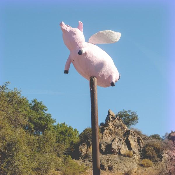 Topanga Cyn, Flying Pig