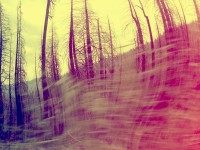 spinning with trees