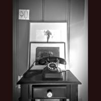 tree, elefant and the telefone